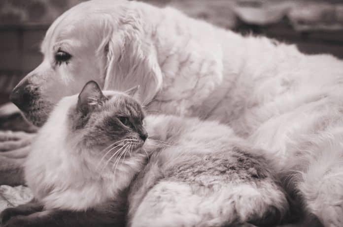 ljubimac, kućni ljubimac, smrt ljubimca, kada ljubimac ugine, bolest, ljubav, pas, mačka,